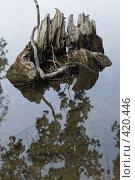Купить «Коряга и водная гладь лесного ручья», фото № 420446, снято 24 августа 2008 г. (c) Федор Королевский / Фотобанк Лори