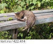 Купить «Кот уснул, едва забравшись на скамейку», фото № 422414, снято 25 августа 2008 г. (c) Олег Суворов / Фотобанк Лори