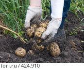 Купить «Русские национальные забавы. Копка картофеля», фото № 424910, снято 24 августа 2008 г. (c) Ирина Солошенко / Фотобанк Лори