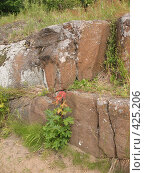 Купить «Валаам. Замшелый камень, клён», фото № 425206, снято 6 августа 2008 г. (c) Морковкин Терентий / Фотобанк Лори