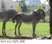 Купить «Зебры, одна  уткнувшаяся  в  другую», фото № 425298, снято 27 апреля 2008 г. (c) елена бурова / Фотобанк Лори