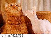 Купить «Два кота - рыжий и сфинкс», фото № 425738, снято 16 апреля 2008 г. (c) BGodunoff / Фотобанк Лори