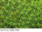 Купить «Моховидное растение. Polytrichum», фото № 426186, снято 11 августа 2008 г. (c) Алексей Судариков / Фотобанк Лори