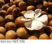 Купить «Лесные орехи и цветок герани», фото № 427190, снято 15 августа 2008 г. (c) Вера Беляева / Фотобанк Лори