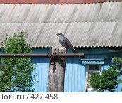 Купить «Кукушка на турнике», фото № 427458, снято 4 июня 2007 г. (c) Фёдоров Дмитрий / Фотобанк Лори