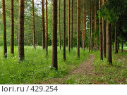Купить «Лесной пейзаж (сосновый бор)», фото № 429254, снято 14 июня 2008 г. (c) Дмитрий Яковлев / Фотобанк Лори