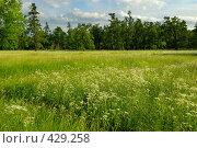 Купить «Летний пейзаж с цветущим лугом», фото № 429258, снято 14 июня 2008 г. (c) Дмитрий Яковлев / Фотобанк Лори