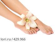 Купить «Женские ноги и цветок лилии», фото № 429966, снято 26 июля 2008 г. (c) Вадим Пономаренко / Фотобанк Лори