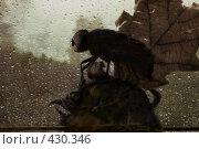 Купить «Гербарий», фото № 430346, снято 5 августа 2008 г. (c) Забалуев Игорь Анатолич / Фотобанк Лори