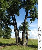 Дерево. Стоковое фото, фотограф Ирина Трофимова / Фотобанк Лори