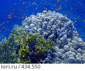 Купить «Подводный мир», фото № 434550, снято 4 ноября 2006 г. (c) Ольга Хорошунова / Фотобанк Лори