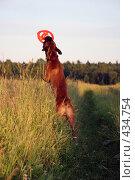 Купить «Фрисби на закате», фото № 434754, снято 23 июля 2008 г. (c) Olya&Tyoma / Фотобанк Лори