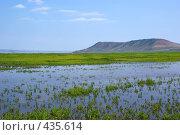 Купить «Заливной луг на Братском водохранилище», фото № 435614, снято 19 июля 2008 г. (c) Виталий Попов / Фотобанк Лори