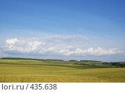 Купить «Большое ячменное поле», фото № 435638, снято 27 июля 2008 г. (c) Виталий Попов / Фотобанк Лори