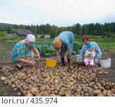 Купить «Сортировка картофеля. Русские национальные забавы», эксклюзивное фото № 435974, снято 31 августа 2008 г. (c) Ирина Солошенко / Фотобанк Лори