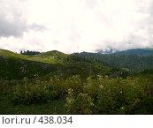 Купить «Альпийские луга Абхазии», фото № 438034, снято 22 августа 2007 г. (c) Андрей / Фотобанк Лори
