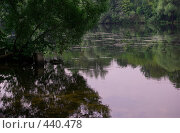 Купить «Берег реки», фото № 440478, снято 18 августа 2008 г. (c) Максим Кузнецов / Фотобанк Лори
