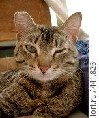 Купить «Подмигивающий кот с рваным ухом», фото № 441826, снято 21 июня 2008 г. (c) Стучалова Наталия / Фотобанк Лори