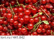 Красная смородина. Стоковое фото, фотограф Дмитрий Голиков / Фотобанк Лори