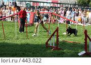Купить «Соревнования собак», фото № 443022, снято 16 августа 2008 г. (c) Виктор Аксёнов / Фотобанк Лори