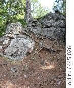 Купить «Корни и камни», фото № 445026, снято 6 августа 2008 г. (c) Заноза-Ру / Фотобанк Лори