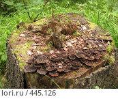 Купить «Гостеприимный пень», фото № 445126, снято 6 августа 2008 г. (c) Заноза-Ру / Фотобанк Лори