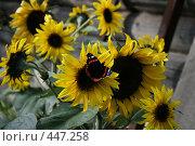 Яркая бабочка на красивом цветке. Стоковое фото, фотограф Ольга Кузнецова / Фотобанк Лори