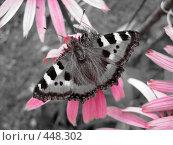 Купить «Бабочка и пчела на цветке», фото № 448302, снято 24 августа 2008 г. (c) Андрей / Фотобанк Лори