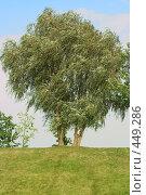 Купить «Одинокое дерево», фото № 449286, снято 6 сентября 2008 г. (c) Цветков Виталий / Фотобанк Лори