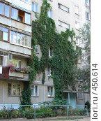 Купить «Стена панельного дома, увитая плющом», фото № 450614, снято 6 сентября 2008 г. (c) Ольга Романенко / Фотобанк Лори