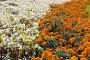 Цветочный фон, фото № 451790, снято 7 сентября 2008 г. (c) Сергей Лаврентьев / Фотобанк Лори