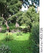 Купить «Ландшафтный дизайн. Оформление парка.», фото № 453726, снято 9 августа 2008 г. (c) Морковкин Терентий / Фотобанк Лори