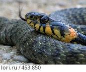 Купить «Змея», фото № 453850, снято 24 июля 2006 г. (c) Дмитрий Лагно / Фотобанк Лори
