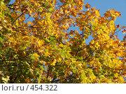 Кленовое дерево осенью. Стоковое фото, фотограф Сергей Усс / Фотобанк Лори
