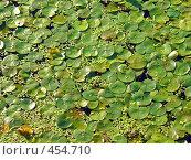 Купить «Водная текстура», фото № 454710, снято 23 августа 2006 г. (c) Владислав Грачев / Фотобанк Лори