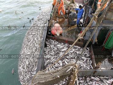 Камчатский залив. Промысловое рыболовство