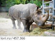 Купить «Старый носорог», фото № 457366, снято 15 июня 2008 г. (c) Арестов Андрей Павлович / Фотобанк Лори