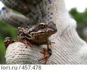 Купить «Диалог с лягушкой», фото № 457478, снято 1 июня 2008 г. (c) Оля Косолапова / Фотобанк Лори