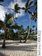 Купить «Пальмы на фоне синего неба», фото № 458822, снято 2 июля 2008 г. (c) Hemul / Фотобанк Лори