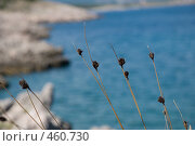 Купить «Прибрежная трава», фото № 460730, снято 18 августа 2008 г. (c) Pukhov K / Фотобанк Лори