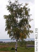 Осенние мотивы. Стоковое фото, фотограф николай шишкин / Фотобанк Лори