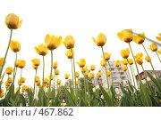Купить «Желтые тюльпаны», фото № 467862, снято 21 марта 2019 г. (c) Losevsky Pavel / Фотобанк Лори