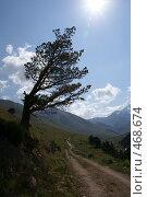 Купить «Силуэт дерева», фото № 468674, снято 11 августа 2008 г. (c) Антон Щербина / Фотобанк Лори