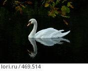 Купить «Лебедь в пруду вечером», фото № 469514, снято 14 октября 2007 г. (c) Андрей Лабутин / Фотобанк Лори