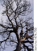 Купить «Ветки сухого дерева», фото № 474750, снято 1 ноября 2007 г. (c) Александр Ерёмин / Фотобанк Лори