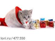 Купить «Котенок и подарки», фото № 477550, снято 20 сентября 2008 г. (c) Cветлана Гладкова / Фотобанк Лори