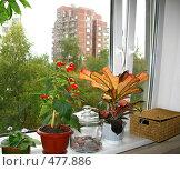 Купить «Пластиковое окно. Комнатные цветы», фото № 477886, снято 20 сентября 2008 г. (c) Юлия Подгорная / Фотобанк Лори