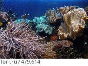 Купить «Подводный мир в аквариуме», фото № 479614, снято 23 сентября 2006 г. (c) Ирина / Фотобанк Лори