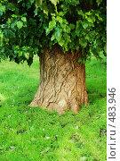 Купить «Старый тополь», фото № 483946, снято 21 сентября 2008 г. (c) Лифанцева Елена / Фотобанк Лори