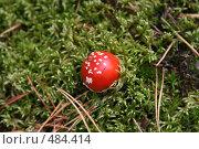 Купить «Мухомор маленький», фото № 484414, снято 14 сентября 2008 г. (c) Мария Малиновская / Фотобанк Лори